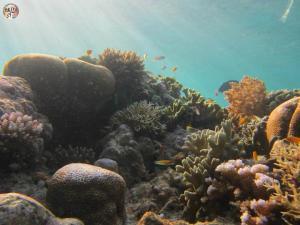 Underwater Pulau Menjangan